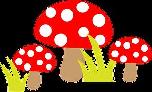fungus-1297277__180